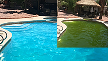 Pool green to clean treatment in Las Vegas
